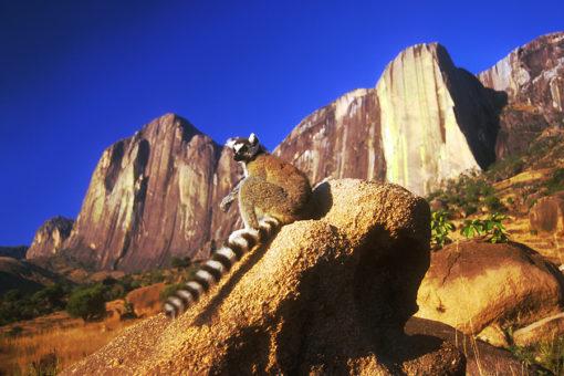 Lémur catta - Faune Tsarasoa Lodge