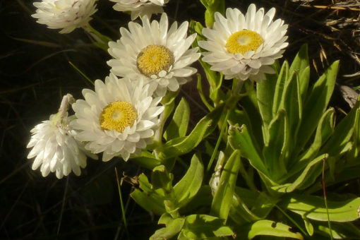 Espèces de flore - Tsarasoa Lodge Madagascar