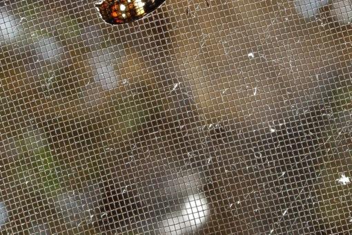 Espèces de papillons rare - Tsarasoa Lodge