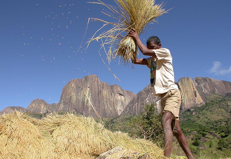 Battage du riz - Paysage Tsarasoa Lodge Madagascar